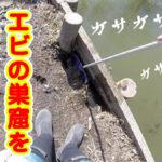 【自己採取】メバル釣りに使うシラサエビを自己採取してみた動画!【水元公園】