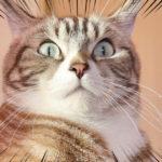 【猫のケンカ】俺をーーーーーーーーーーー!!!!!